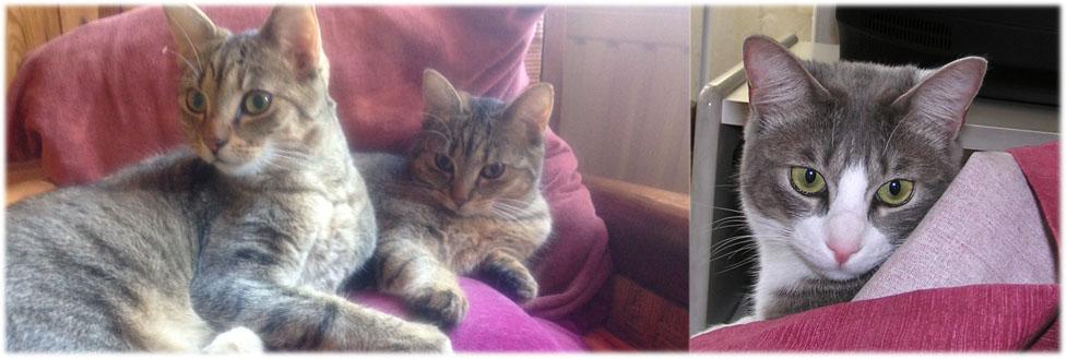 Je vous présente mes 3 chats : Lili, Louise et Chaussette