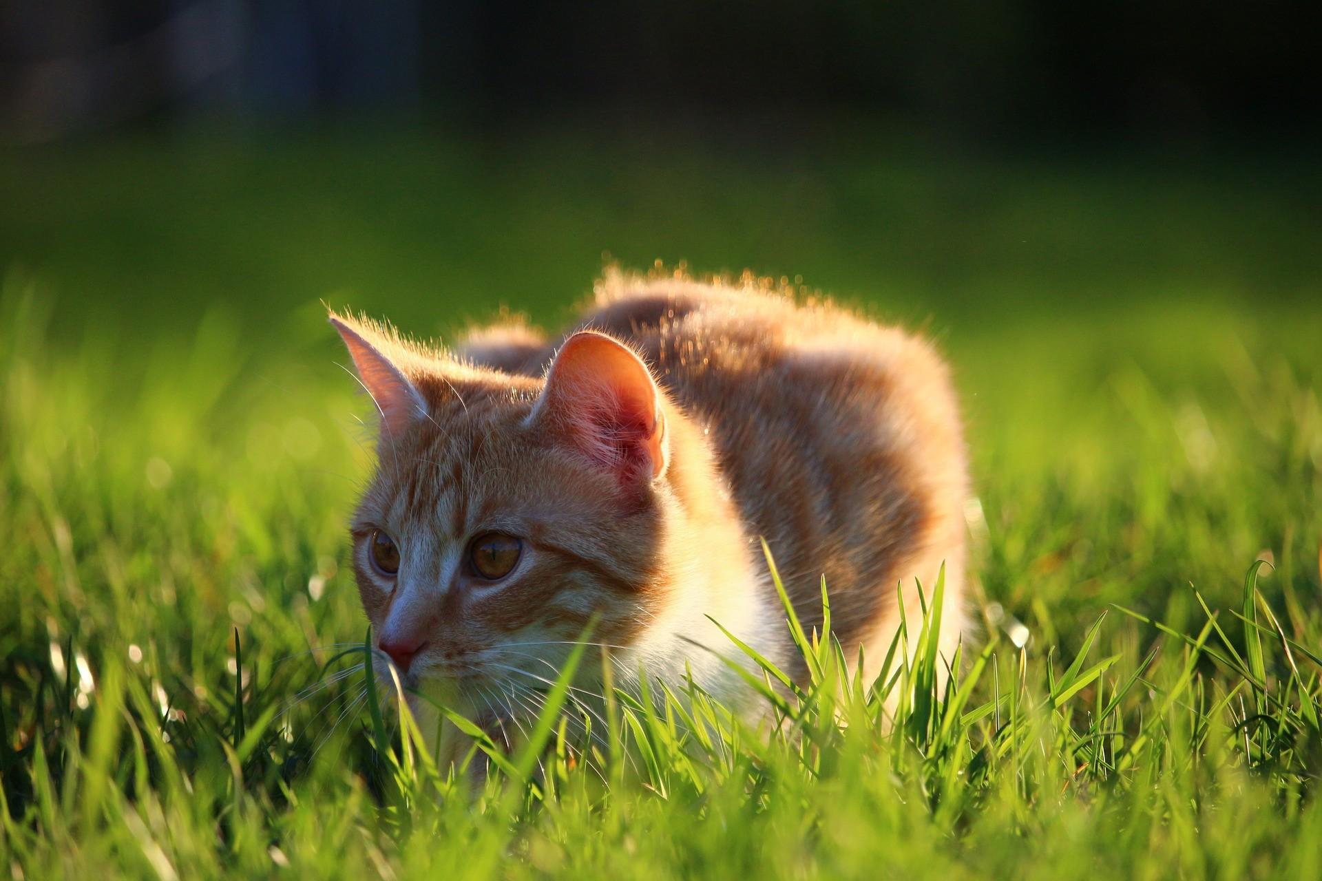 4 conseils pour assurer le bien-être de votre chat en automne